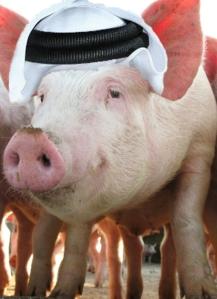 Pig of Qatar