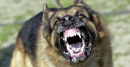 mean-dog1