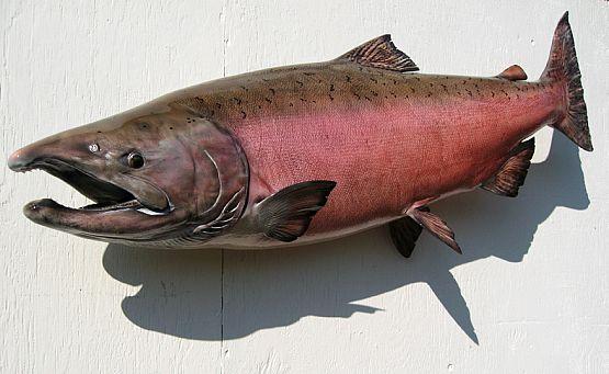 kenai_chinook_king_salmon_00078