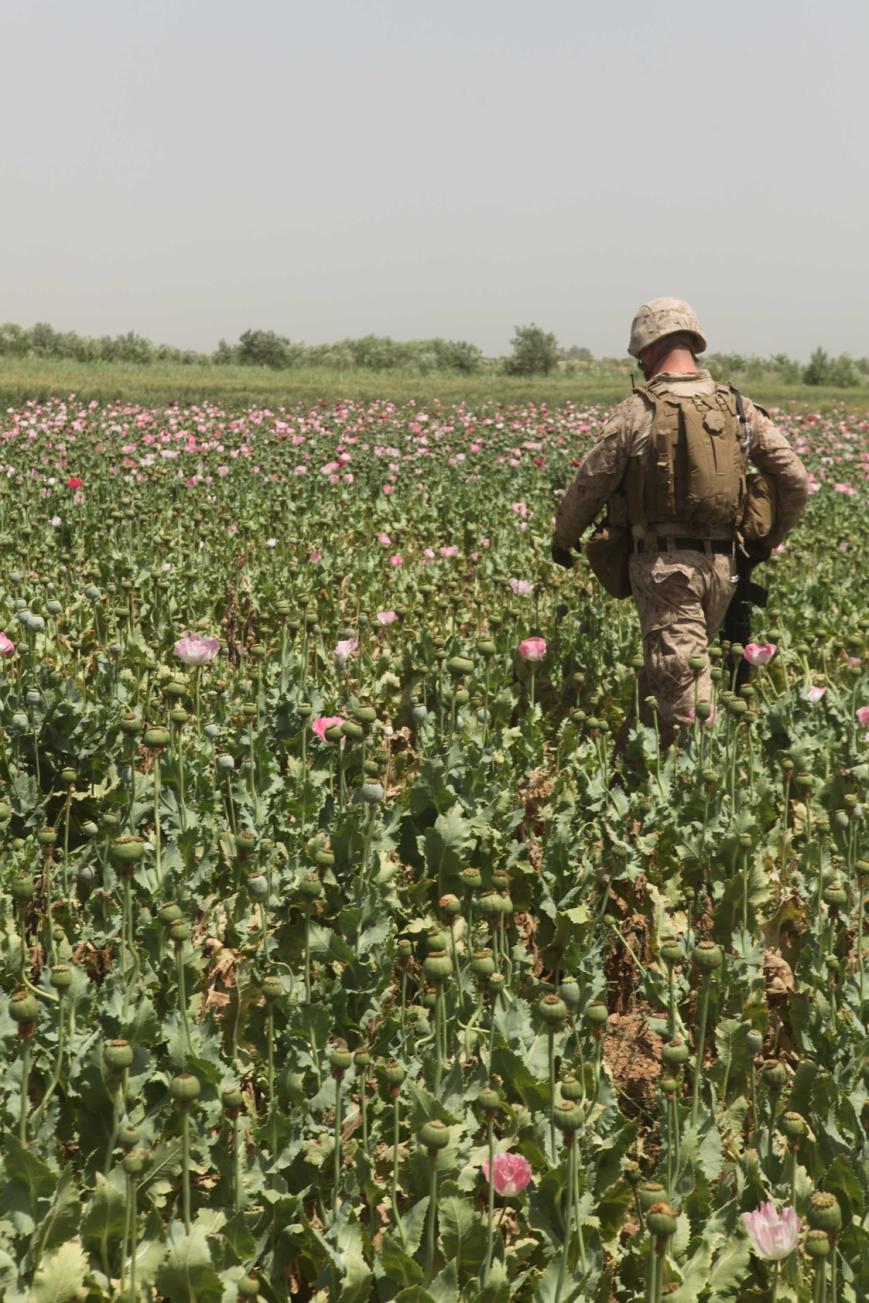 opium-fields3